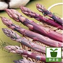 アスパラガス:パープルジャンボ(紫アスパラ)養生株3.5号ポット4株セット