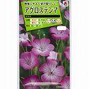 [タキイ 花タネ]アグロステンマ ギダゴの種