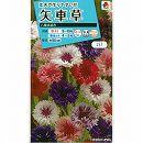[タキイ 花タネ]矢車草(ヤグルマギク・セントーレア) 八重咲混合