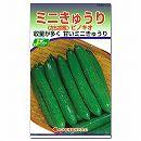 [野菜タネ]キュウリ:ピノキオ(ミニきゅうり)*