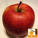 リンゴ:陽光(ようこう)4号ポット