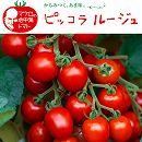 イタリアントマト:ピッコラルージュ3号ポット2株セット