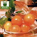 食用ホオズキ:オレンジチェリー3号ポット2株セット