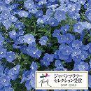 エボルブルス(枝咲き):ブルーシエル3.5号ポット2株セット