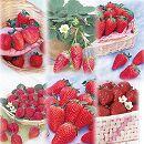 イチゴ:人気6品種おためし12株セット
