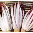 [7月まき 赤と白のコントラストがきれい イタリアで人気の高級野菜! 野菜タネ]赤チコリ タルディーボの種