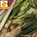 タラノキ(たらの芽)3.5号ポット 5株セット
