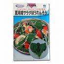 [野菜タネ]ほうれんそう:夏用味サラダほうれんそう*