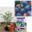 ブルーベリー栽培セット:暖地向き苗2種と栽培用品