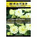 [花タネ]アクイレギア(西洋オダマキ)ウィンキーシリーズダブル:ホワイトホワイト*
