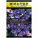 [花タネ]アクイレギア(西洋オダマキ)クレメンタインシリーズ:ブルー*