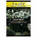 [花タネ]アルメリア シューダメリア:ジョイスティック ホワイト
