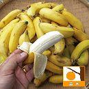 [17年4月中旬予約]バナナ:沖縄島バナナ3.5号ポット