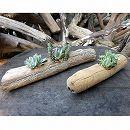 流星木M・Sサイズ2個セット(多肉植物4種・3種寄せ植えの流木フラワーポット)