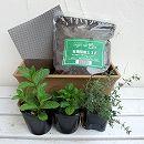 窓辺でハーブと花の栽培セット:ワイルドストロベリー、スペアミントとタイム