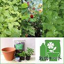 ハーブ栽培セット7.5号鉢Bティー用(レモンバーム・ワイルドストロベリー・アップルミント)