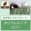 [タネ 家畜・ウサギ 採草・放牧 春・秋まき]牧草種子:ラジノクローバー・カリフォルニアラジノ1kg