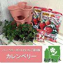 [17年2月中旬予約]いちご栽培セット:ハーベリーポットといちご苗9株カレンベリー