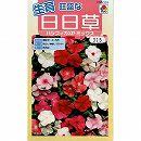 [タキイ 花タネ]日日草(ニチニチソウ):生育旺盛なパシフィカXP ミックス