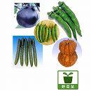 [17年4月中旬予約]京野菜5種10株セット