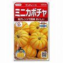 [サカタ 野菜タネ]かぼちゃ:プッチィーニ