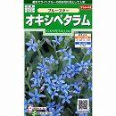 [サカタ 花タネ]オキシペタラム:ブルースターの種