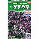 [サカタ 花タネ]宿根かすみ草:ピレネーピンクの種