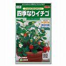 [タネ]四季なりイチゴ:ワイルドストロベリー