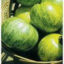 [外皮が縞模様・アメリカの人気品種 野菜タネ]トマト:グリーントマト(グリーンゼブラ)