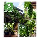 [17年4月中旬予約]e-プランター(イープランター)で緑のカーテン・ゴーヤ栽培セット