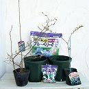 ブルーベリー栽培セット:フクベリーとティフブルー4〜5号ポット