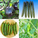 京野菜4種4株セット