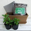窓辺でハーブと花の栽培セット:ワイルドストロベリー、スペアミント