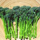 茎ブロッコリー:スティックセニョールの苗2.5号ポット4株セット