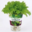 フレッシュベジ:レタス栽培セット(底面給水)