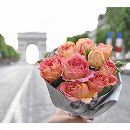 [17年5月中旬予約]デルバールローズ:ラ・パリジェンヌ新苗4号鉢植え