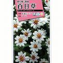 [タキイ 花タネ]百日草:夏花壇に最適!ザハラスターライトローズ