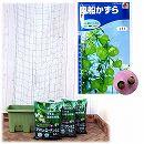 種から育てる緑のカーテン栽培セット:風船かずら(楽々菜園750型)