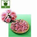 食用菊:桃(もってのほか)2.5号ポット3株セット
