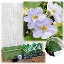 [17年5月中旬予約]苗から育てる緑のカーテン栽培セット:ベンガルヤハズカズラ(楽々菜園750型)
