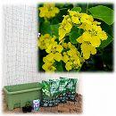 [17年5月中旬予約]苗から育てる緑のカーテン栽培セット:オーキッドバイン(楽々菜園750型)