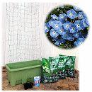 苗から育てる緑のカーテン栽培セット:アサガオ(イポメア):西洋朝顔 天上の蒼(楽々菜園750型)