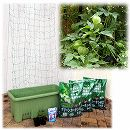 [17年5月中旬予約]苗から育てる緑のカーテン栽培セット:風船かずら(楽々菜園750型)