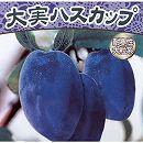 大実ハスカップ(ハニーベリー)4.5号ポット