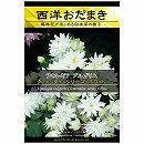 [花タネ]アクイレギア(西洋オダマキ)クレメンタインシリーズ:ホワイト*