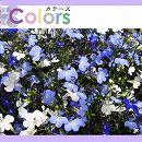 カラーズ:スカイティアラ Bミックス3.5号ポット