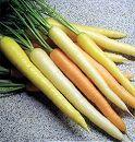 [3色ミックスの甘くておいしい人参の種 野菜タネ]ニンジン:スイートプリンセス