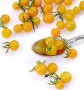 [野菜タネ]トマト:マイクロトマト イエロートパーズ