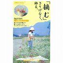 [花タネ]ワイルドフラワー:花摘みミックスの種