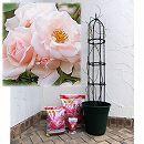 つるバラ栽培セット:ニュードーン 大苗長尺と鉢・オベリスク・用土・肥料のセット
